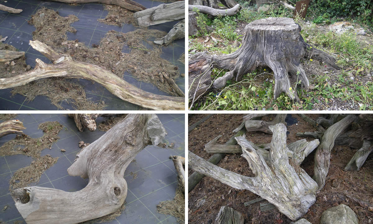 branches, logs & driftwood image