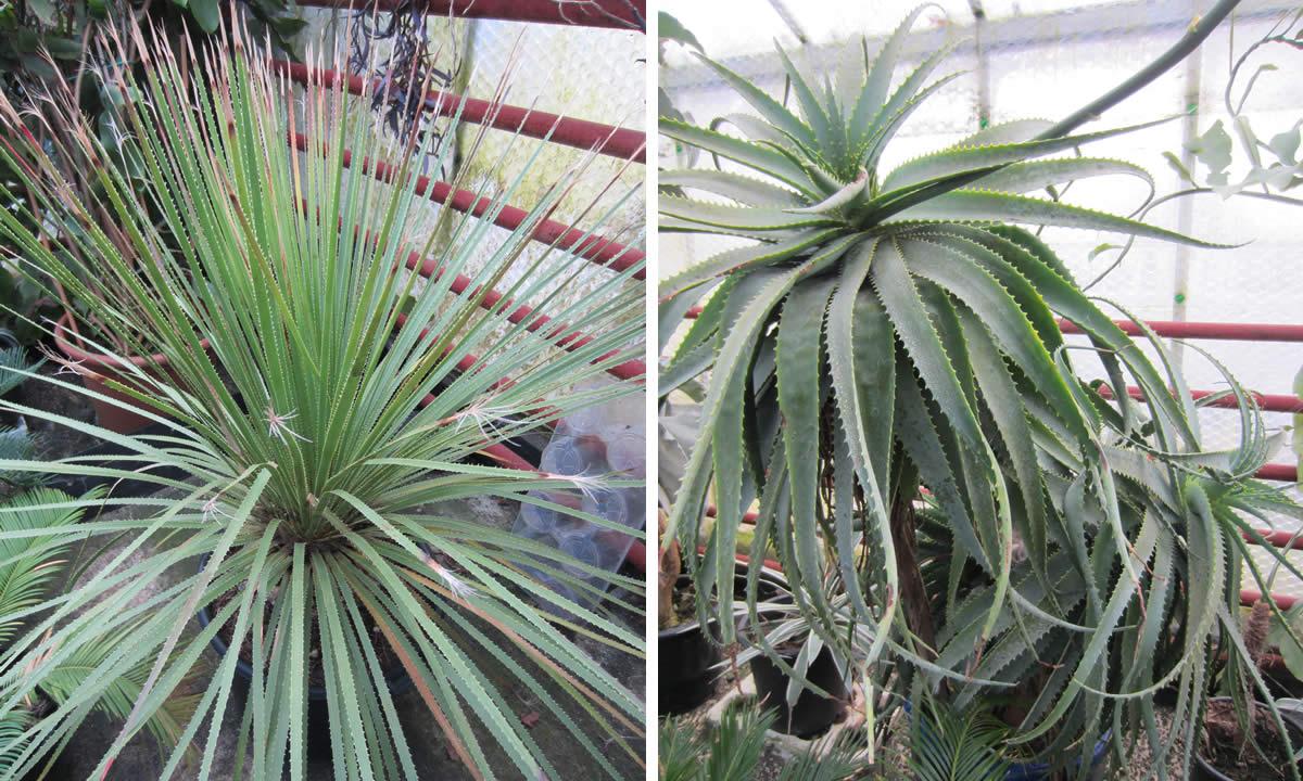 cacti & succulents image