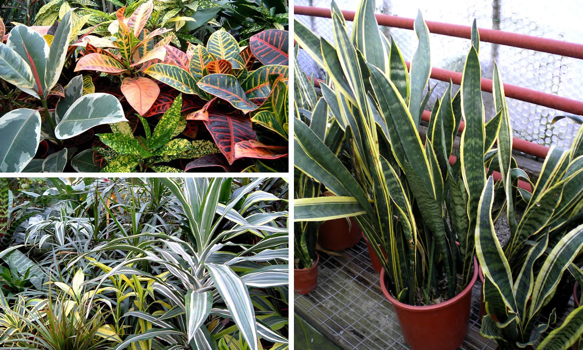 house and office plants image