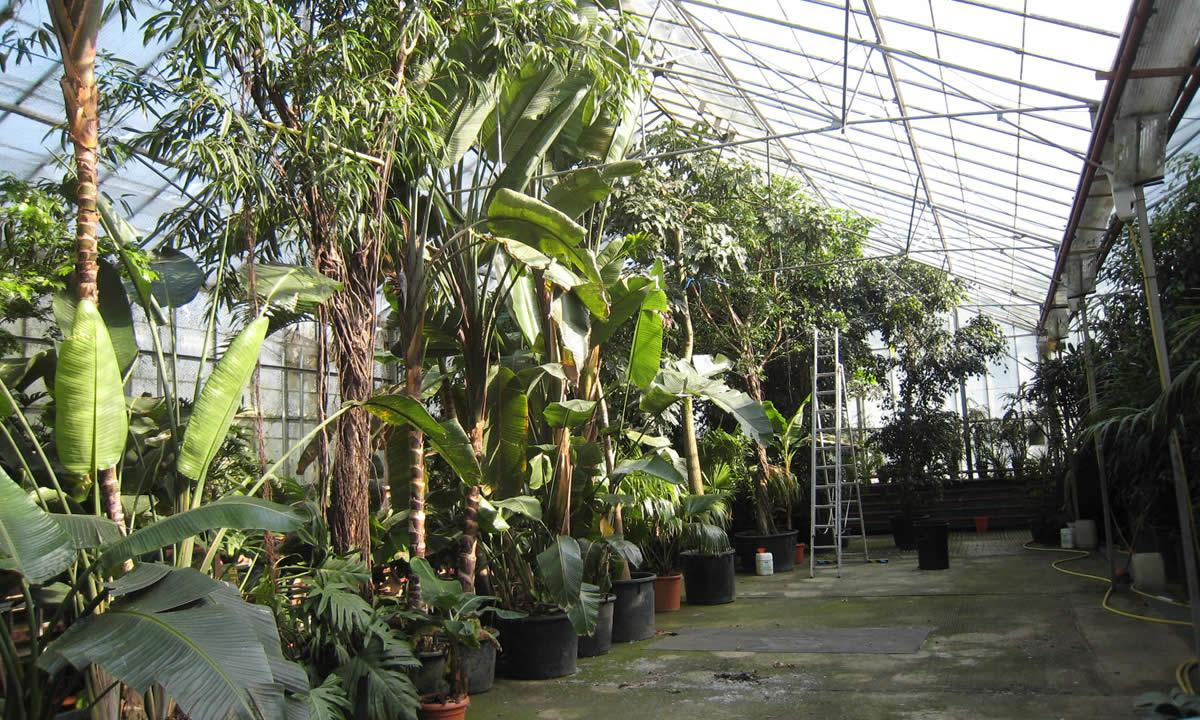 indoor trees image five