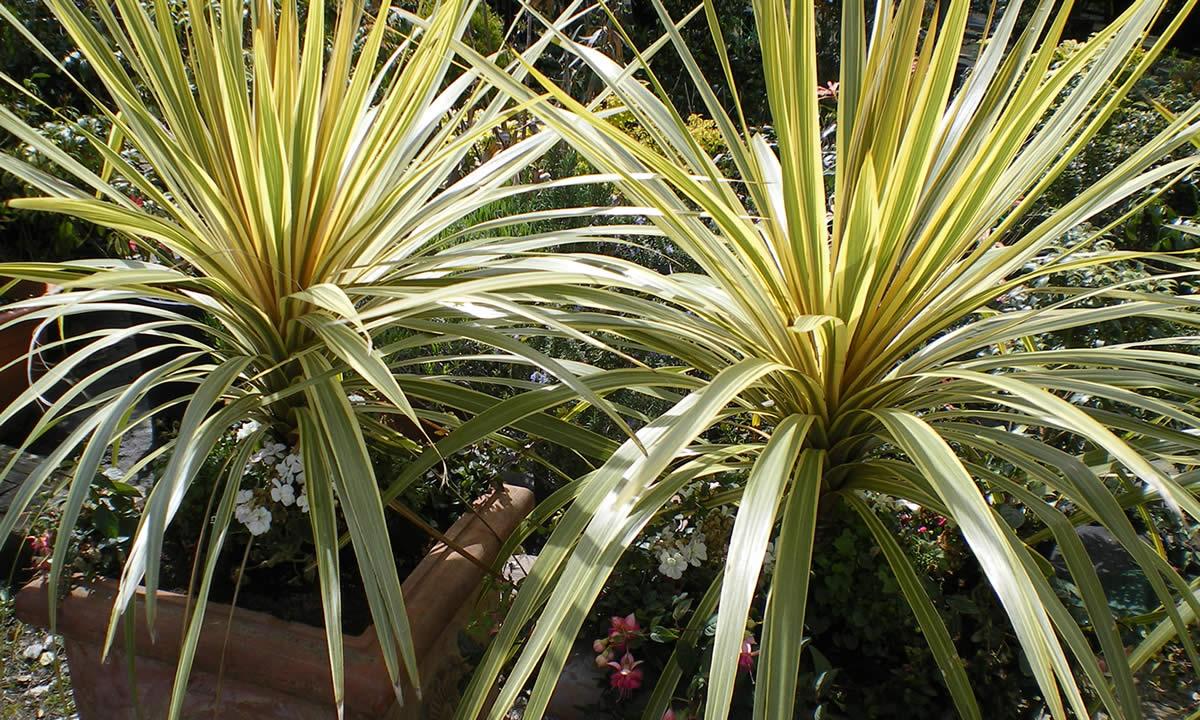 Ornamental Garden Plants 1 Living Props