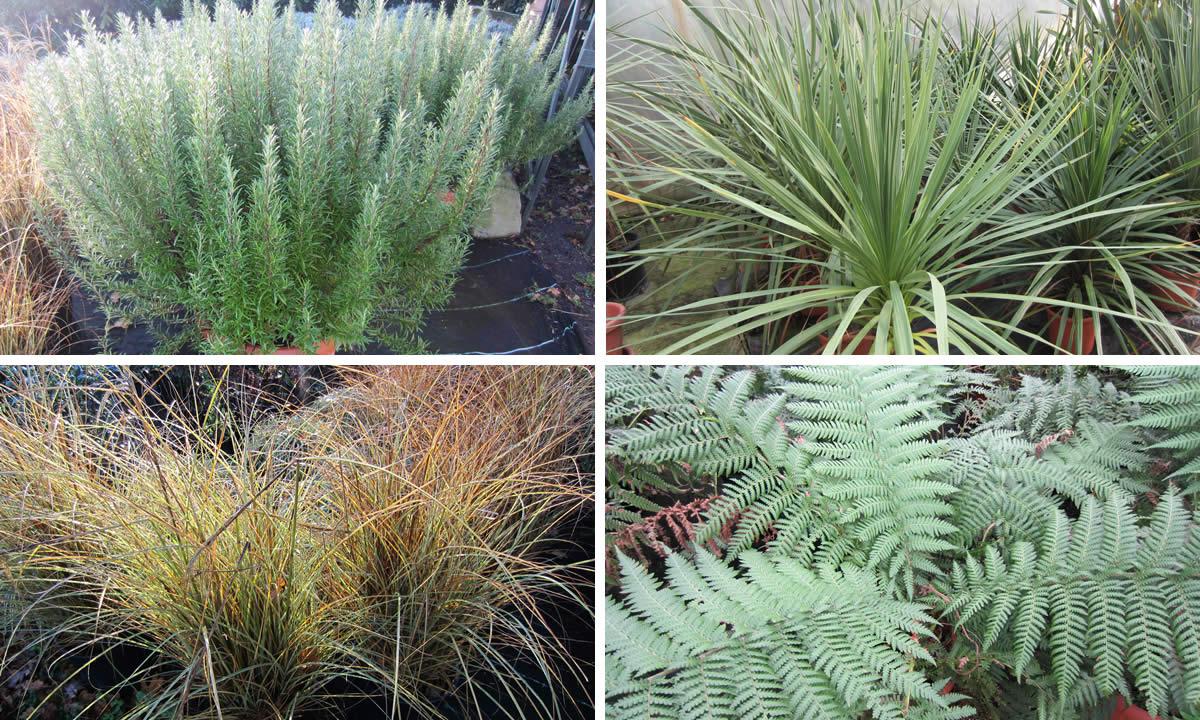 ornamental garden plants image