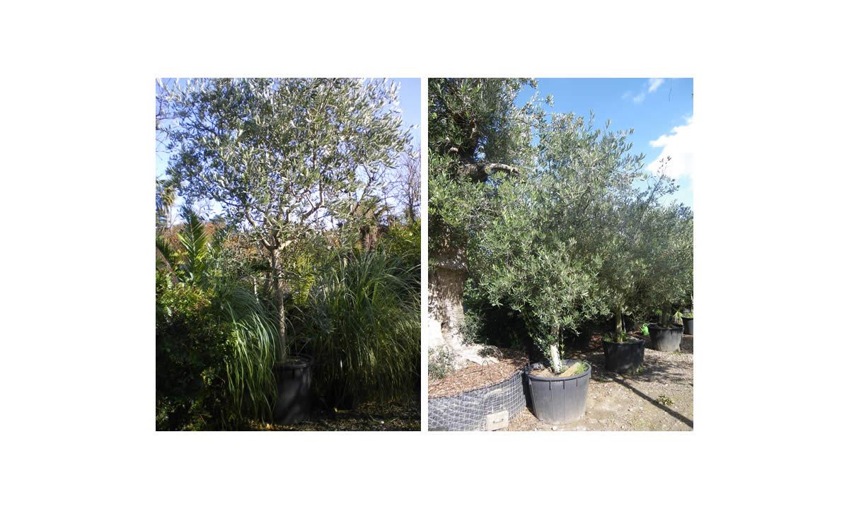 outdoor trees image three