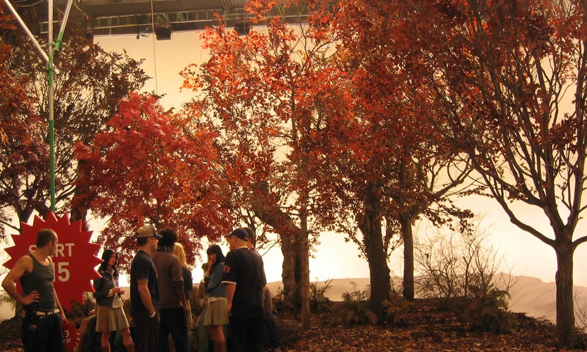 autumn dressed trees