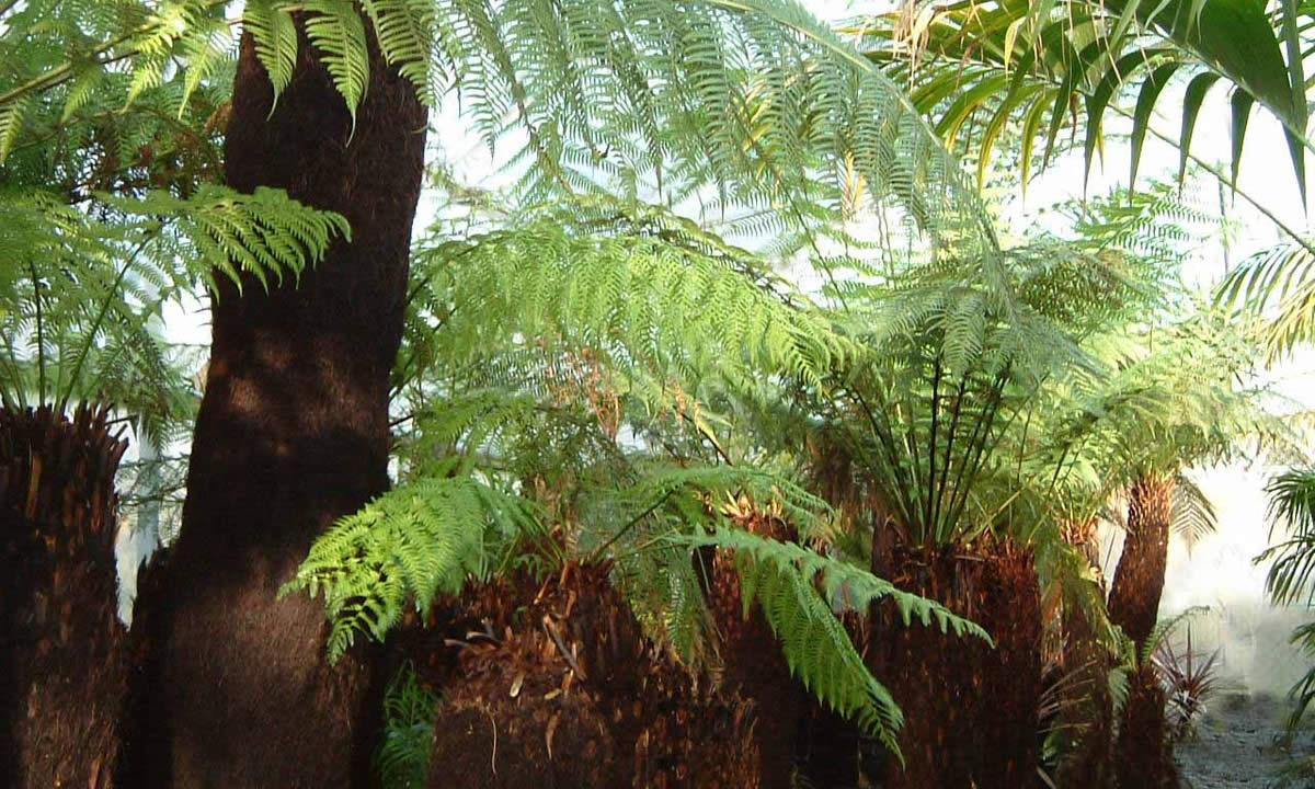 tree ferns image