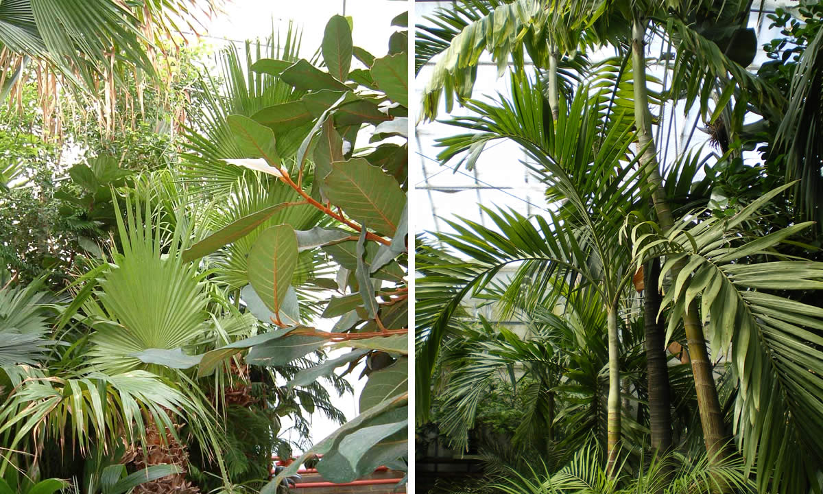 tropical plants and palms image